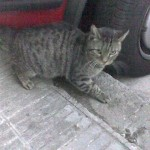 Putas la gata salvaje en barcelona