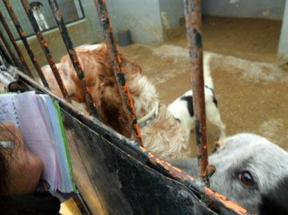 Siete perros que esperan un milagro en Mairena Abuelo-Mairena1