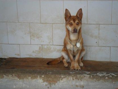 Siete perros que esperan un milagro en Mairena Buz