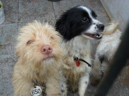 Siete perros que esperan un milagro en Mairena Funny1