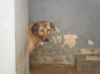 Siete perros que esperan un milagro en Mairena Hembra-asustada-Mairena1
