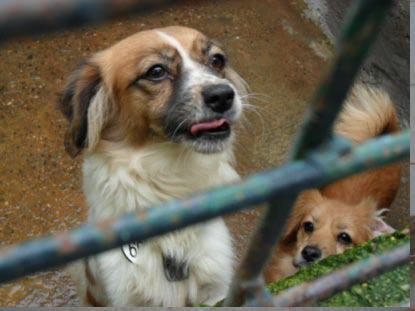 Siete perros que esperan un milagro en Mairena Llani