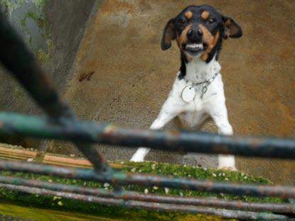 Siete perros que esperan un milagro en Mairena Tico