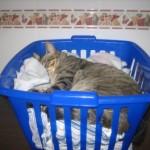 MAx durmiendo en el cesto de la ropa