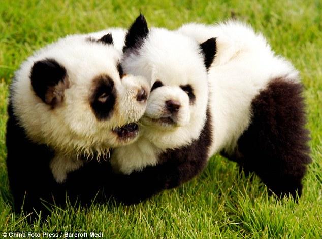 tapete zoo hund teddy - photo #41