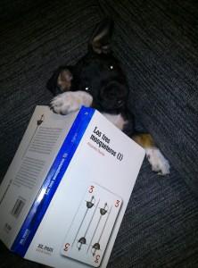 Sisco, el perro de MrDavidmore.
