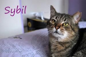 Sibyl_abril3