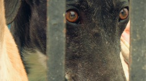 Imagen promocional del documental.