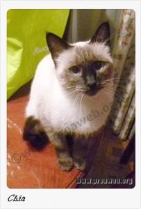 Chía, en adopción en proaweb.org
