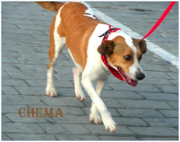 chema (53)