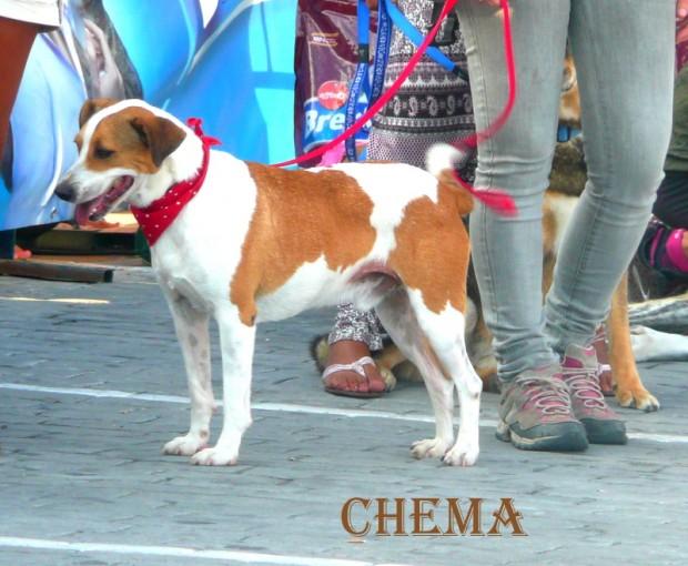 chema (59)