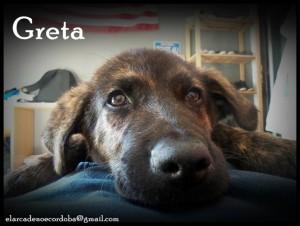 Greta es una cachorrona y está en una jaula, sin entender lo que ha pasado. Busca una familia. elarcadenoecordoba@gmail.com