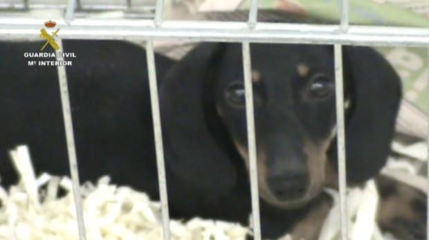 2014-12-11_intervencion_cachorros_06