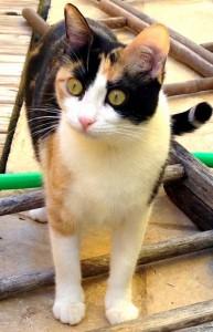 Nina es otra gatita tricolor, de la cual se deshizo su familia porque se volvían a su país. La dejaron abanadonada a su suerte, y no procuraron ni tan siquiera dejarla en buenas manos.