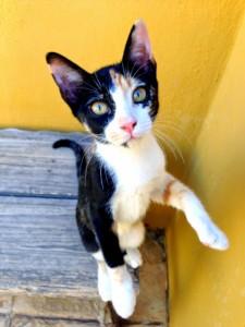 Nora es una gatita que rescatamos de cachorra junto a otro hermanito pero ella por ser tricolor no tuvo la misma suerte que su hermano y ya tiene 8 meses y va creciendo sin tener oportunidad.