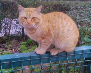 A Garfield le abandonaron tras conseguir un perro, que era lo que realmente querían.