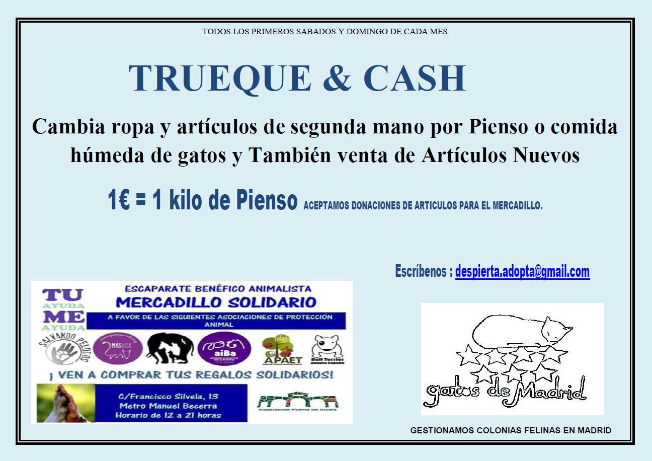 Rubius El Galgo Moussel El Gato Y Un Evento Animalista En Madrid  ~ Mercadillo De Segunda Mano Madrid