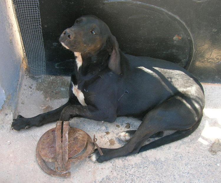 El cachorro en el cepo en busca de una segunda oportunidad for Cepos para plazas de garaje