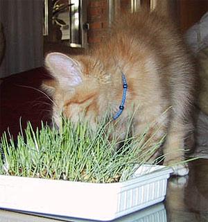 Gatos y plantas relaciones peligrosas en busca de una Plantas seguras para gatos