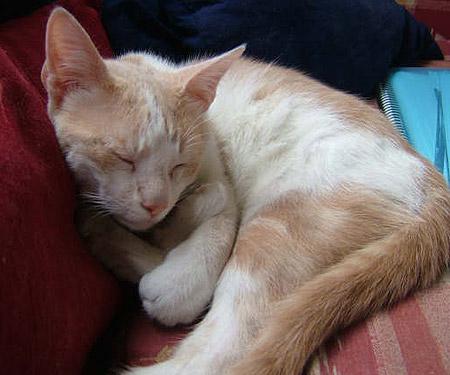 ¿Qué tan rápido duran las infecciones del ojo de gato?