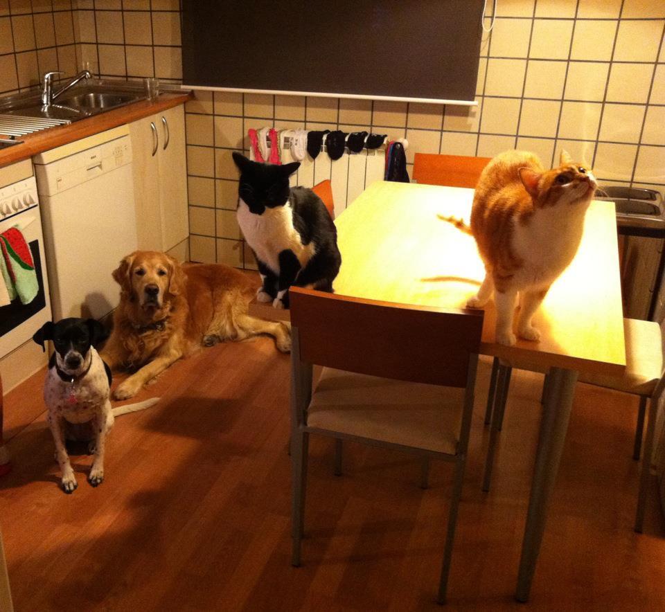Una cocina puede ser tendedero, comedor y granja de animales