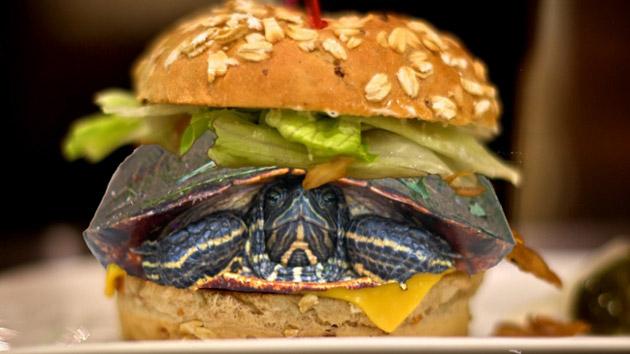 tortuga_hamburguesa