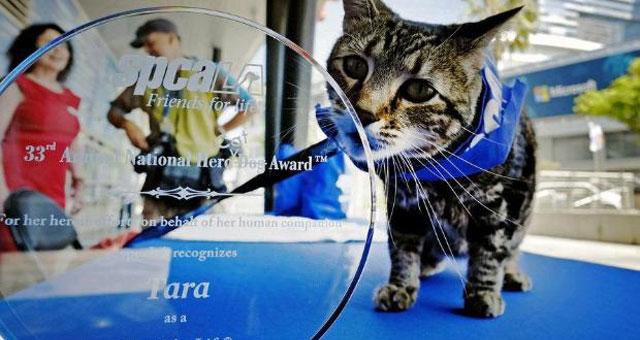 tara_award
