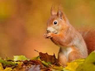 squirrel_drunk