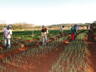 Hombres y mujeres de la Comunidad Fortuna Guasu trabajan una huerta hortícola con sistema de riego, uno de los primeros logros del proyecto. Foto: Osvaldo Méndez