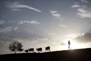 Un niño cuida de su ganado en Lankien. © Brendan Bannon.