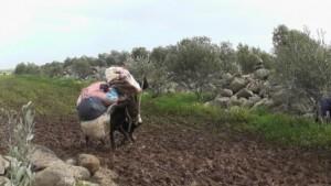 Los suministros de MSF llegan a una zona sitiada del norte de Homs. MSF