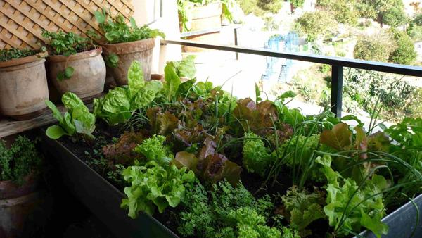 Mesa de cultivo de hortalizas. Foto de http://ecohortus.es/