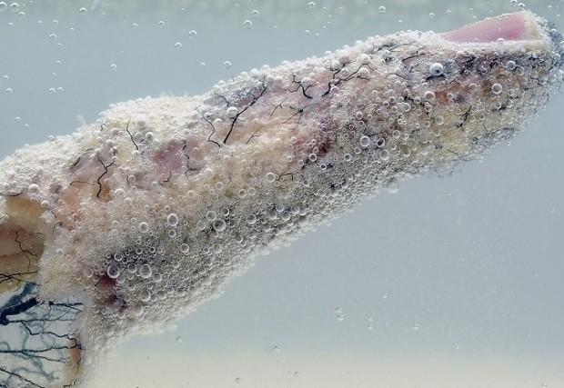 Fotografía ganadora de la última edición de Fotciencia. La imagen muestra la red arterial del dedo índice de un cadáver tras haber sido sumergido en una solución de hipoclorito de sodio (lejía). En ella se observa el efecto corrosivo del líquido sobre los tejidos blandos / Cultura Científica CSIC