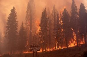 El incendio de 1988 arrasó XX hectáreas / Wikiepedia