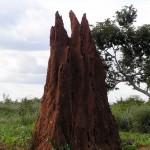 Algunos termiteros pueden llegar a medir varios metros de altura y diámetro. Jeff Attaway.