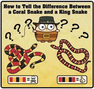 cartel serpiente coral