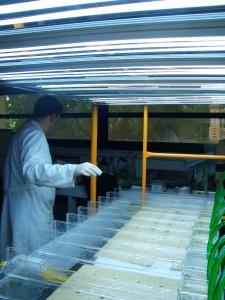 Vista canales artificiales en el laboratorio
