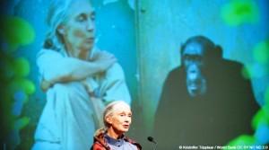 Imagen de la primatóloga Jane Goodall