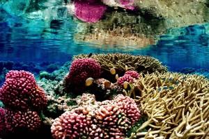 Corales marinos. / USFWS/Jim Maragos. Flickr