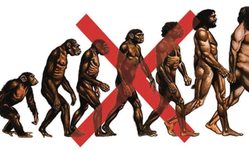 venimos del mono pero no del chimpanc ciencia para llevar