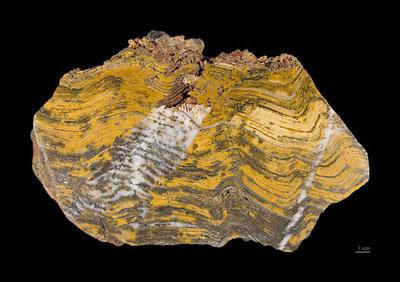 Un estromatolito, roca formada por la fosilización de tapices de microbios, entre ellos cianobacterias. Este se encontró en la región de Pilbara (Australia) y su edad se estima en unos 3.500 millones de años. Didier Descouens.
