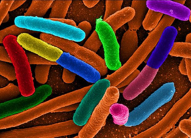Imagen al microscopio electrónico de bacterias 'E. coli' con falso color.