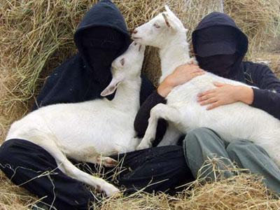 Activistas del Frente de Liberación Animal con dos cabras rescatadas de un laboratorio en Reino Unido en 2006. ALF.