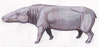 Un antracoterio, pariente del 'Jaggermeryx naida'. Imagen de Dmitry Bogdanov / Wikipedia.