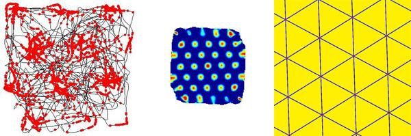 A la izquierda, el recorrido de una rata (en negro) dispara neuronas en una trama reticular (centro y derecha). Imagen de Torkel Hafting / Tomruen / Wikipedia.