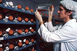 Producción masiva de anticuerpos monoclonales en botellas de cultivo. Imagen de NCI / Linda Bartlett / Wikipedia.