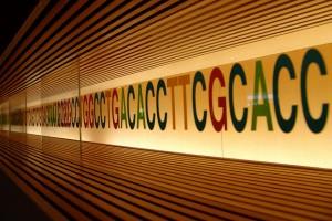 La secuencia del ADN se puede utilizar para cifrar y conservar mensajes. Imagen de Miki Yoshihito / Flickr / CC.