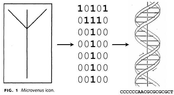 El icono Microvenus y su codificación en ADN. Nótese que su traducción gráfica a código binario se realiza en un panel de 5x7, ambos números primos. Imagen de Joe Davis / JSTOR Art Journal.