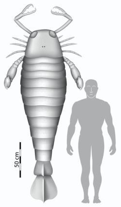 El escorpión marino (euriptérido) 'Jaekelopterus rhenaniae', que vivió hace 390 millones de años. Imagen de Braddy et al, Biology Letters.