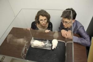 Las investigadoras de la Universidad de Chicago Peggy Mason (derecha) e Inbal Bartal observan a una rata que se dispone a liberar a otra. Imagen de Kevin Jiang.